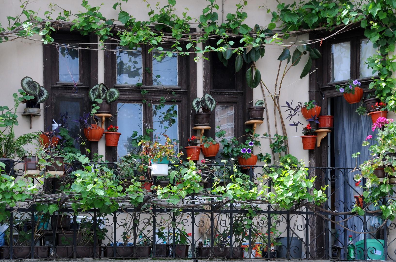 Klasický balkon obrostlý kytkami
